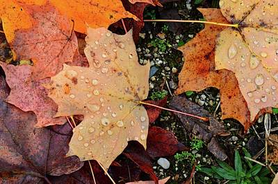 Digital Art - Wet Leaves Of Fall On The Ground Two  by Lyle Crump