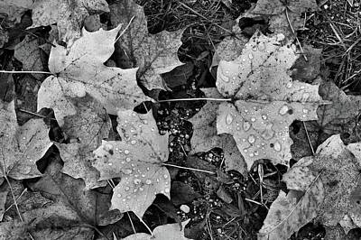 Photograph - Wet Leaves On The Ground Bw  by Lyle Crump