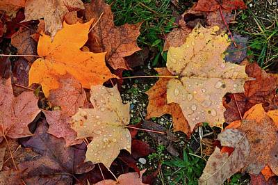 Photograph - Wet Leaves On The Ground  by Lyle Crump