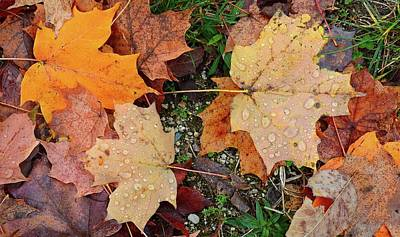 Digital Art - Wet Leaves On The Ground Two  by Lyle Crump