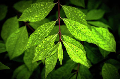 Digital Art - Wet Leaves by Patrick Groleau