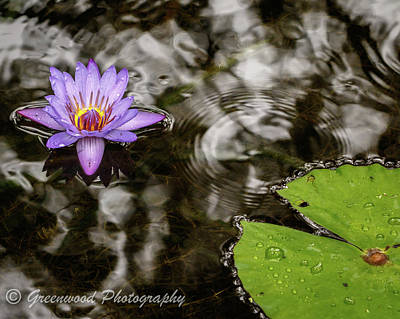 Photograph - Wet Lily by Les Greenwood
