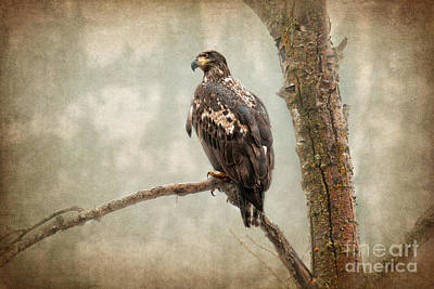 Eagle Photograph - Wet N Wild  by Beve Brown-Clark Photography