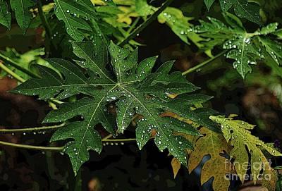 Photograph - Wet Papaya Leaves by Craig Wood