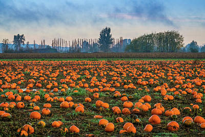 Photograph - Wet Pumpkin Patch by Ken Stanback