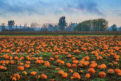 Photograph - Wet Pumpkin Patch by Ken Stanback