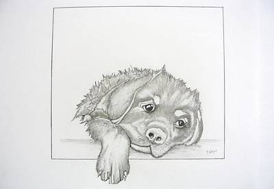 Rottweiler Puppy Drawing - Wet Rottie Pup by Gregory Hayes