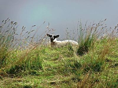 Photograph - Wet Sheep by Stephanie Moore