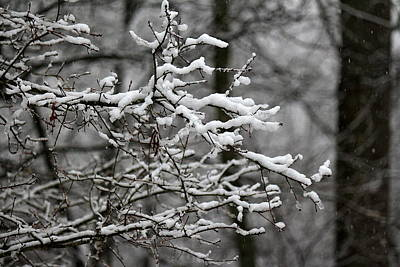 Photograph - Wet Snow by Greg Simmons