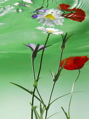 Wet Wild Flower Art Print by Han Van Vonno