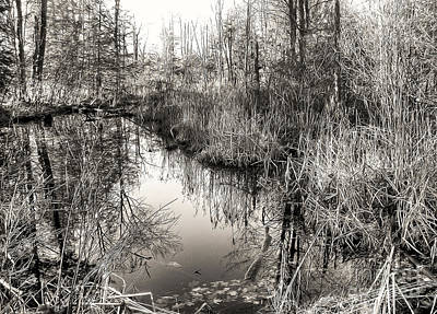 Wetland Essence Art Print by Betsy Zimmerli