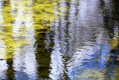 Photograph - Wetland Abstract 1 by Mary Bedy