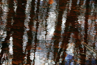 Photograph - Wetland Abstract 4 by Mary Bedy