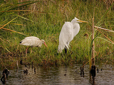 Photograph - Wetland Birds by Charles McKelroy