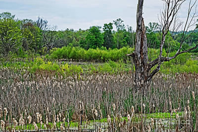 Photograph - Wetland Cattails by Paul Mashburn