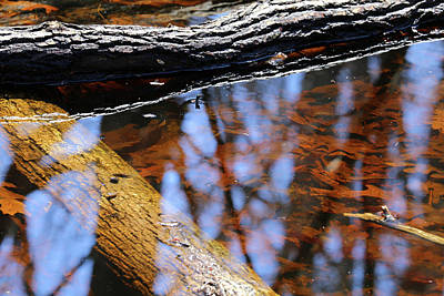 Photograph - Wetland Colors 042918 by Mary Bedy