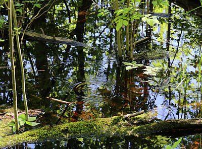 Photograph - Wetland Colors 5 052318 by Mary Bedy