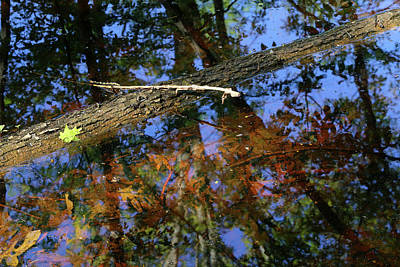 Photograph - Wetland Colors 7 052318 by Mary Bedy