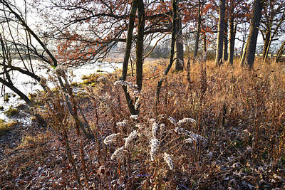 Photograph - Wetland Forest In Glacial Park by Ray Mathis