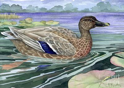 Wetland Painting - Wetland Mallard - Female by Paul Brent