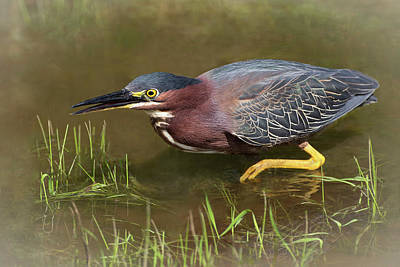 Photograph - Wetland Prowler by Art Cole