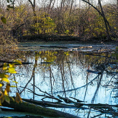 Photograph - Wetland Reflections by Edward Peterson