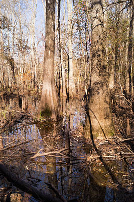 Photograph - Wetland Reflections In The Fall At Waccamaw River Park by MM Anderson