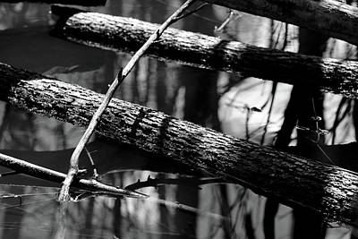 Photograph - Wetland Timber 2 Bw by Mary Bedy