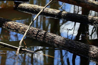 Photograph - Wetland Timber 2 by Mary Bedy