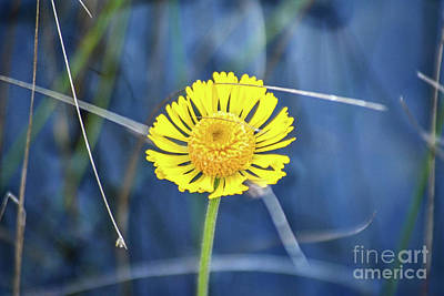 Photograph - Wetland Wildflower by Third Eye Perspectives Photographic Fine Art