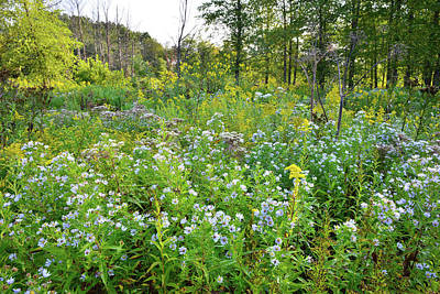 Photograph - Wetland Wildflowers In Hennen Conservation Area by Ray Mathis