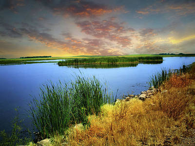 Photograph - Wetlands 17 by William Tanata