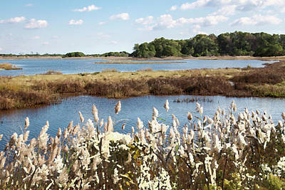Photograph - Wetlands 3 - by Julie Weber
