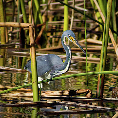 Wetlands Are My Home Art Print by Dawn Currie