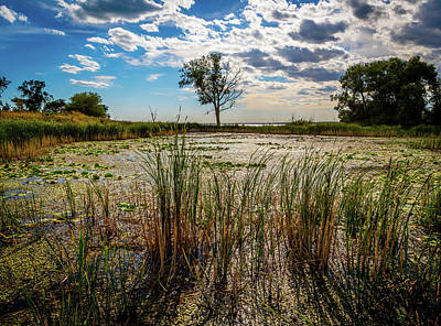 Photograph - Wetlands At Metro Park by Optical Playground By MP Ray