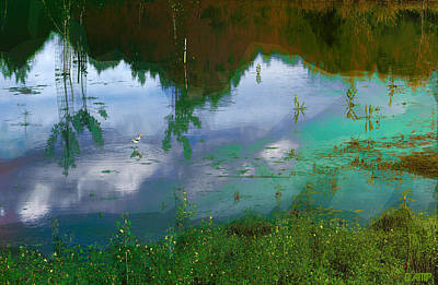 Photograph - Wetlands by David Pantuso