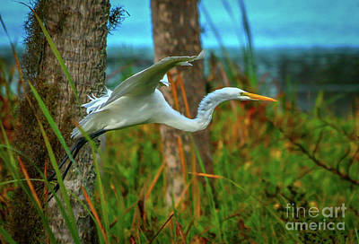 Photograph - Wetlands Egret by Tom Claud