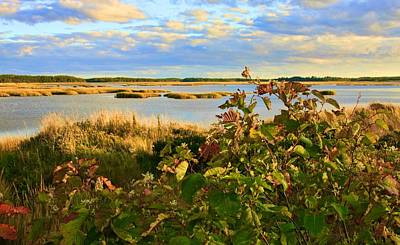 Photograph - Wetlands In Cape Breton by Tatiana Travelways