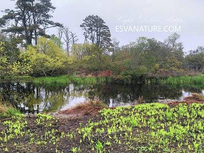 Photograph - Wetlands In Spring 1 by Captain Debbie Ritter