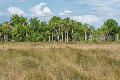 Photograph - Wetlands by John M Bailey