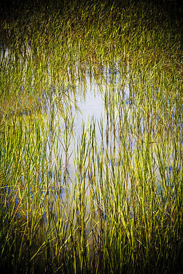 Photograph - Wetlands by Marilyn Hunt