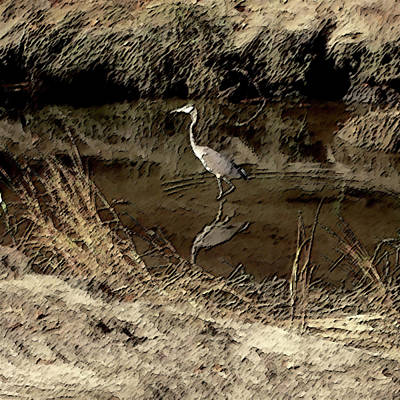 Photograph - Wetlands by Mark Alesse