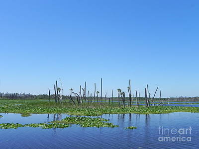 State Word Art - Wetlands of Florida by Jack Norton