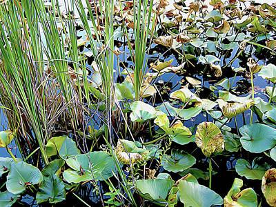 Travel - Wetlands Pond by Linda Carruth