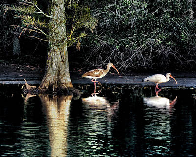 Photograph - Wetlands Reflection by Jim Hill