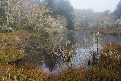 Photograph - Wetlands by Robert Potts