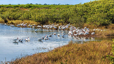 Photograph - Wetlands Watering Hole by John M Bailey
