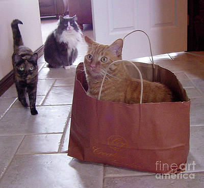 Photograph - We've Got The Cat In The Bag by Donna L Munro