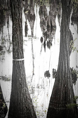 Wewa Dead Lakes Art Print by Toni Hopper