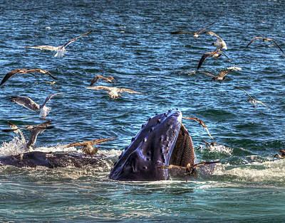 Photograph - Whale 278 by Jeff Stallard